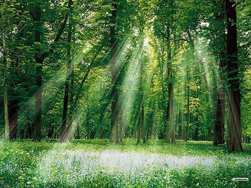 samir jajjawi prozess berartung für firmen. Der Wald mit dem Licht auf dem Foto steht für outplacement